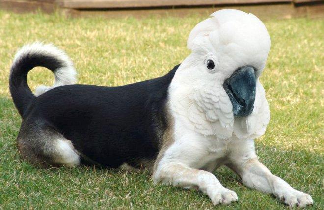 Dirds Cachorro Pássaro (4)