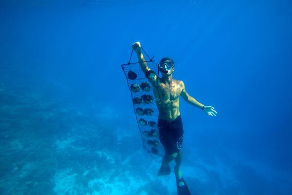 south-pacific-diver-huey_83738_600x450